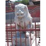Very old female lion - Summer Palace, Beijing.